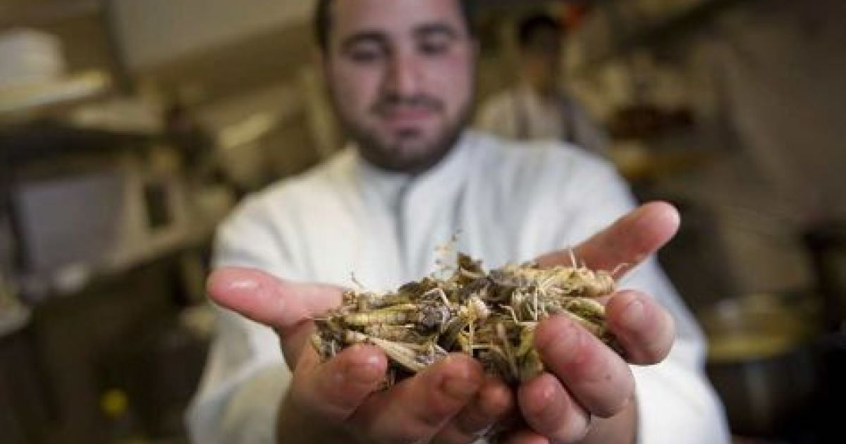 Locusts, swordfish and doves: all the fixings for a gourmet