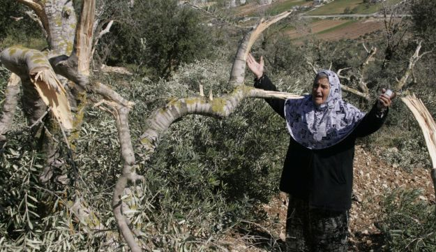 Palestinian woman with uprooted olive trees