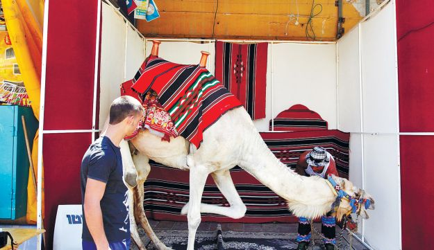 A camel joins in the festivities, during Id al-Fitr celebrations in Acre, on August 19, 2012.