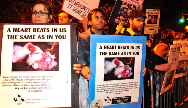 Protestors demonstrate against the use of live chickens in the kapparot ritual in Brooklyn.
