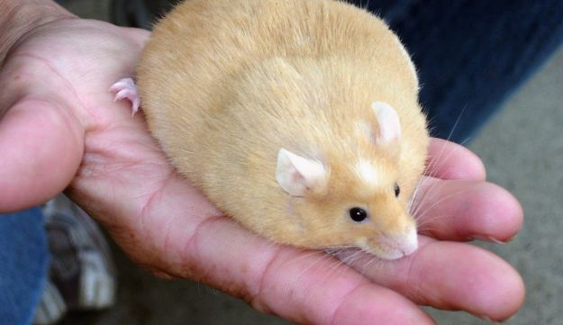BPA: Obese mice (Reuters)