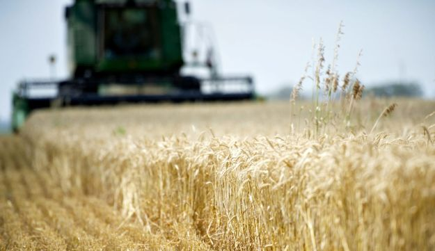 Wheat is a common allergen.