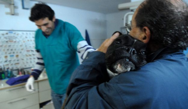 Taking Fido for a rabies shot in Israel (Yaron Kaminsky)