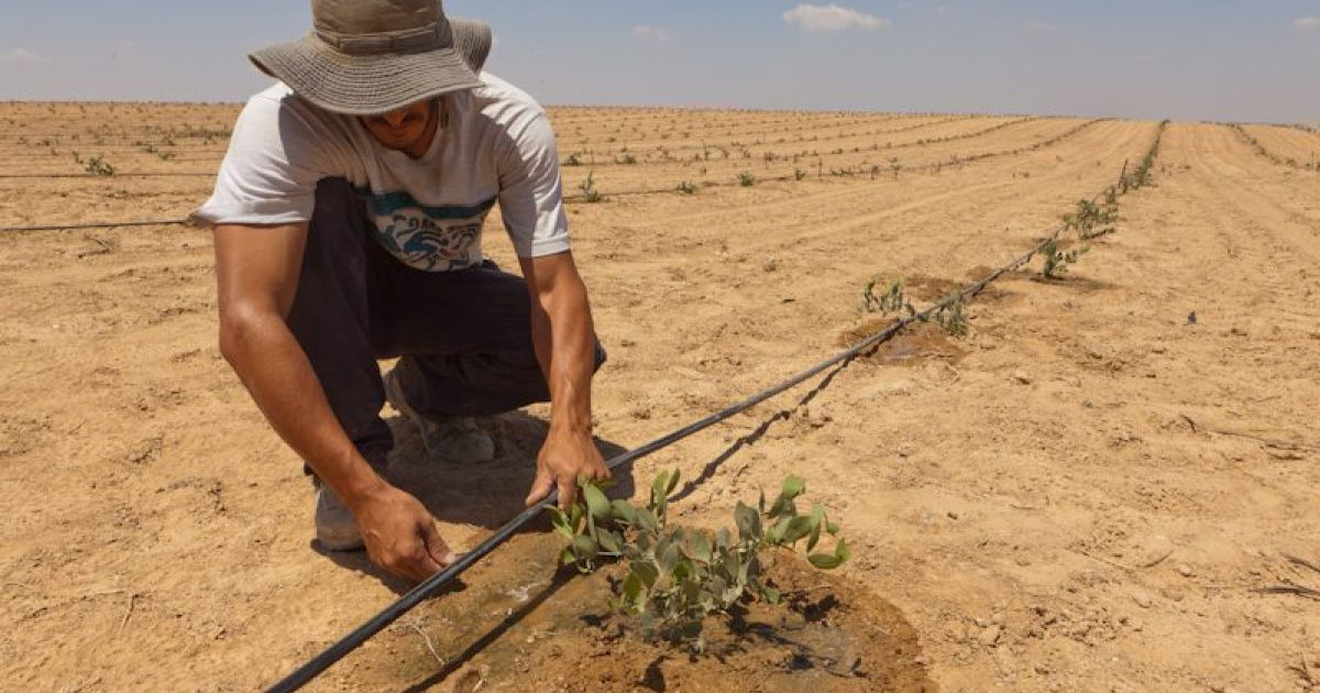 The secret of Israel's water miracle and how it can help a