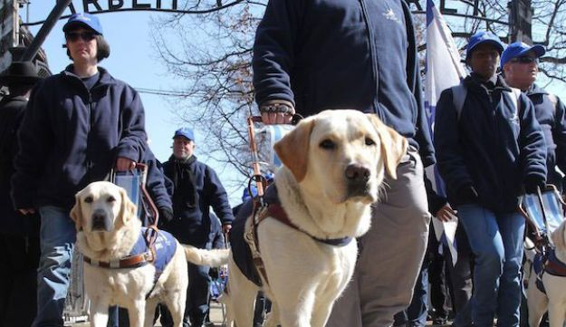 Blind participants with guide dogs attend the 'March of the Living' at the site of former German Nazi death camp Auschwitz, in Oswiecim, Poland, 08 April 2013.