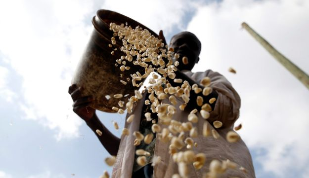 A local miller pouring maize into his grinding mill, in the Kibera slums of Nairobi, Kenya August 6, 2017. Maize is particularly vulnerable to rising temperatures.