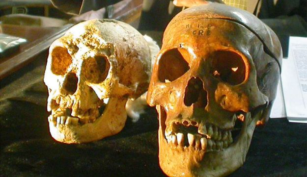 Left is the skull of Homo floresiensis, next to a Homo Sapiens skull.