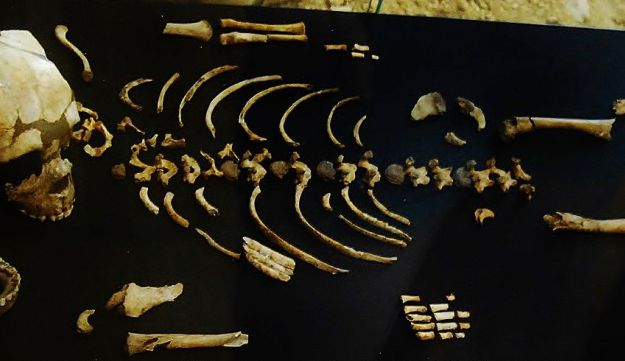 Remains of Neanderthal child, believed to be about 3 years old, found in Roc de Marsal, Dordogne, France.