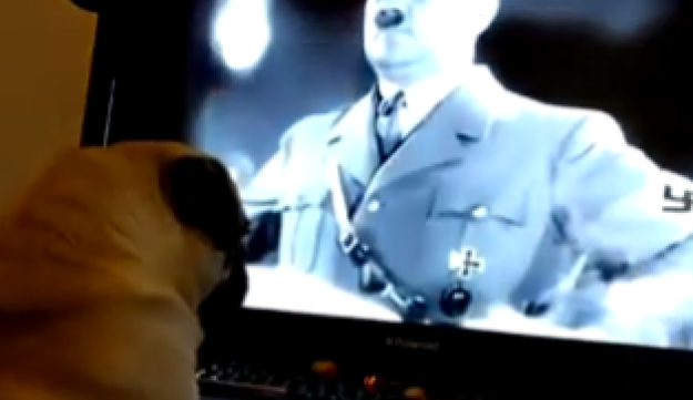 The pug called Buddha watching Hitler's Berlin Olympics rally, as seen in Mark Meechan's YouTube video