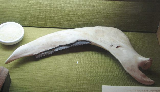Neolithic sickle made of jawbone with embedded flint stone teeth