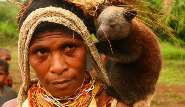 Baby tree kangaroo on the chiefs wifes shoulder in Papua New Guinea