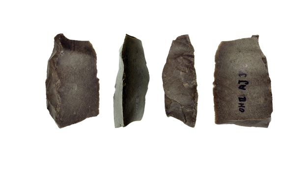 One of five flint sickle-blades from Ohalo II, showing glossing that fades from the edge, due to use in harvesting grains. Four of the five blades were found on the floors of the brush huts. The blades date to about 23,000 years ago, showing that way back then, the locals were already cultivating grain.