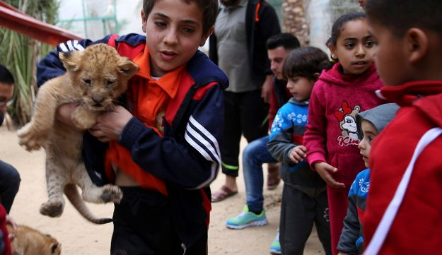 A Palestinian boy holds a two-month-old lion cubs while children watch at the zoo in Rafah, Gaza Strip, December 22, 2017.