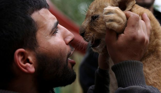 Ahmad Joma'a, a zoo worker, holds a two-month-old lion cub at the zoo in Rafah, Gaza Strip, December 22, 2017.