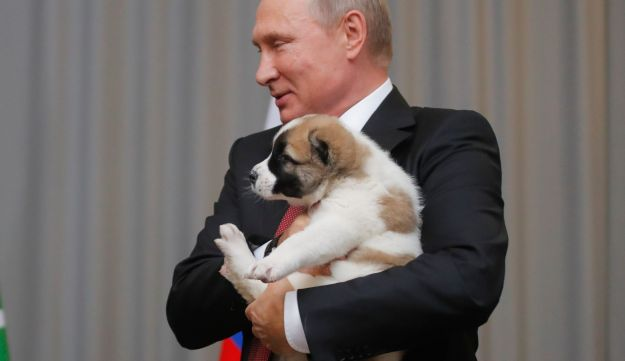 Russian President Vladimir Putin holds a Turkmen shepherd dog received by the Turkmenistan's president in Sochi, Russia, October 11, 2017.