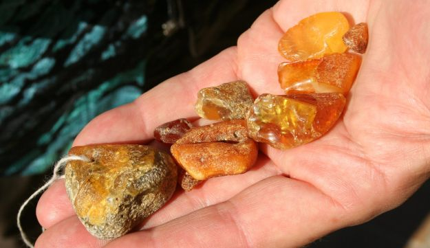 Amber, which is fossilized tree resin, that washed up on the shores of the Baltic Sea.