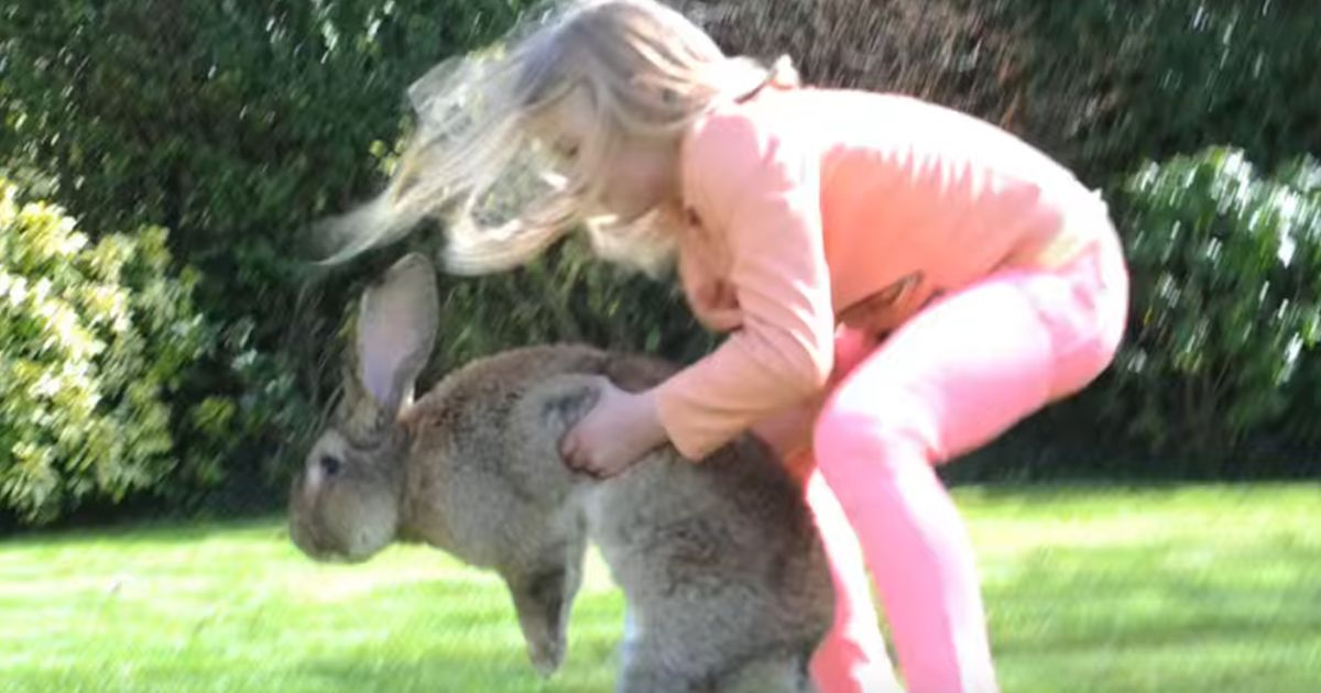 United Can T Get A Break Baby Giant Bunny Rabbit Dies In