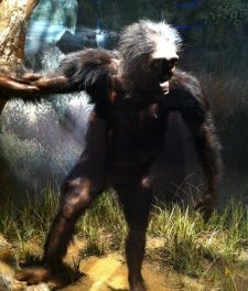 Reconstruction of Lucy: A reconstruction on exhibit in the National Museum of Natural History, Washington, D.C., United States
