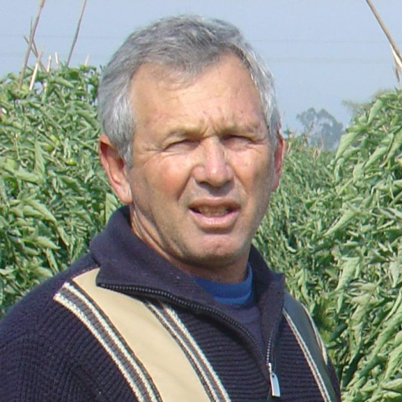 Israel's indebted farmers are pulling up their roots and