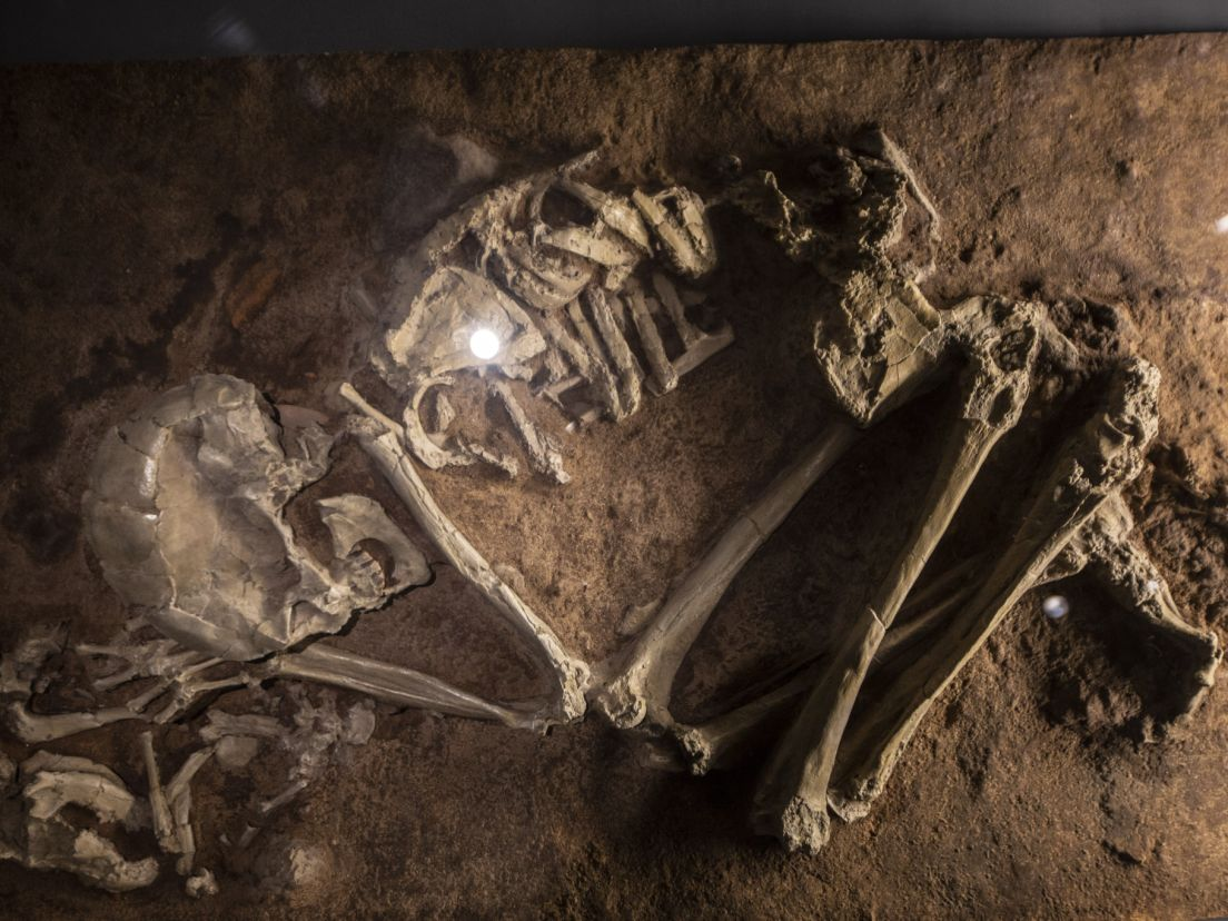 Tel Aviv's new nature museum just discovered human evolution