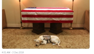 Image from Twitter of H.W. Bush's service dog resting in front of his casket