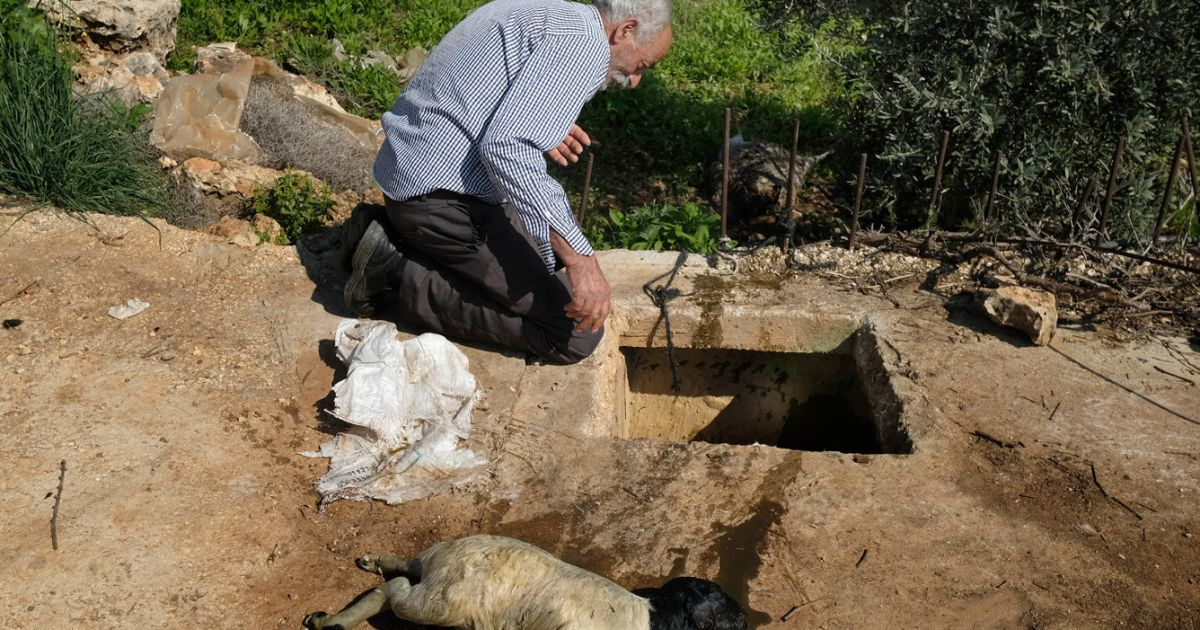 A Palestinian farmer finds dead lambs in his well. He knows who's to blame