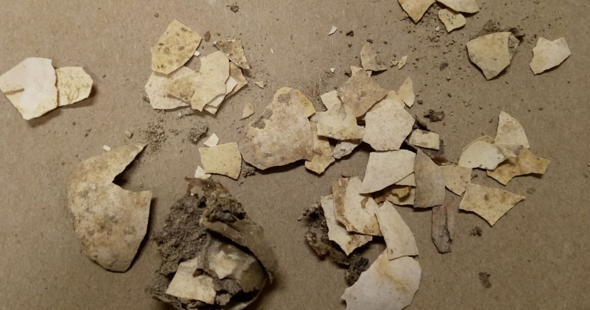 2,600-year-old Jerusalem discovery leaves archaeologists shell-shocked - Archaeology - Haaretz.com