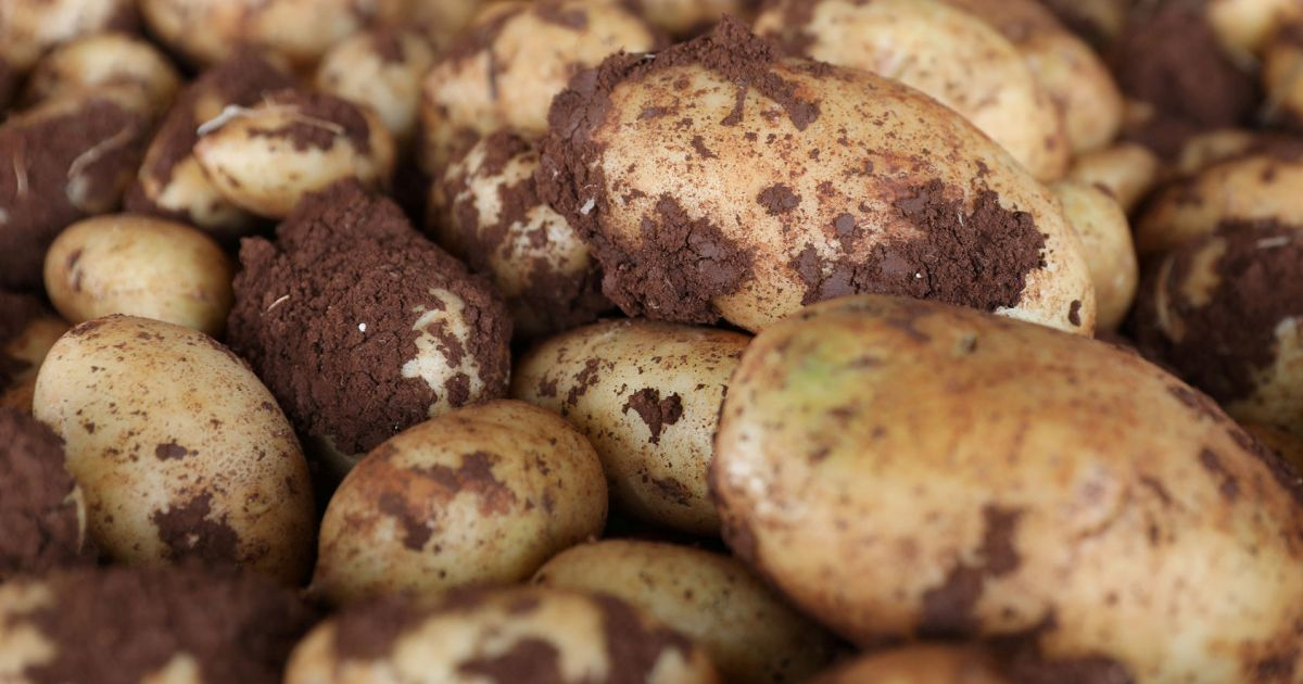 Early Humans Were Roasting Tubers 120,000 Years Ago, Researchers Discover
