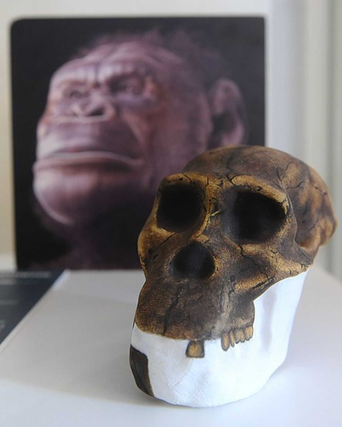 Image result for early man Lucy archaeology