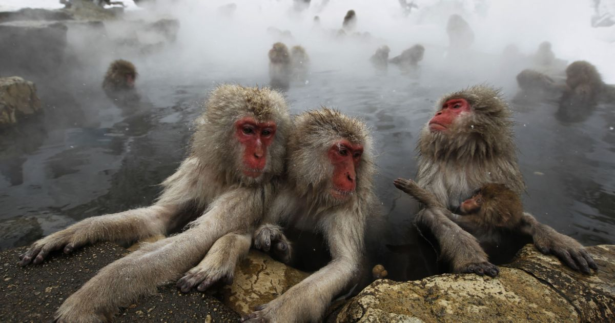 Archaic Humans May Have Cooked 1.7 Million Years Ago – in Hot Springs