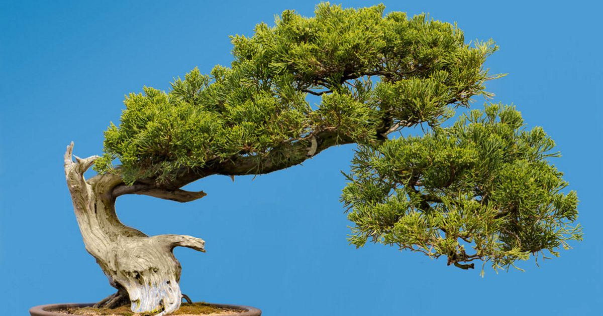Archaeologists Discover King Herod Had a Bonsai Garden